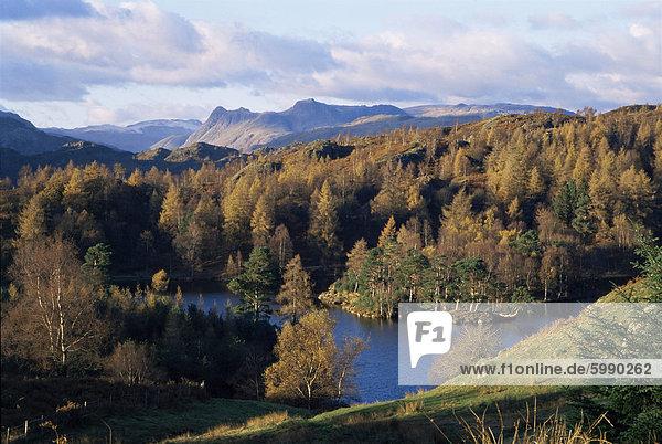 Tarn Hows  Lake District-Nationalpark  Cumbria  England  Vereinigtes Königreich  Europa