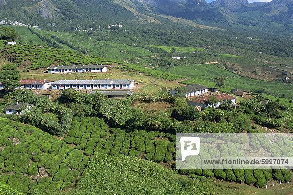 Tee-Land  Westghats nahe Munnar  Bundesstaat Kerala  Indien  Asien