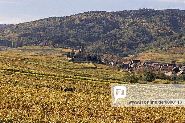 Weinberge,  Hunawihr,  Elsass,  Frankreich,  Europa
