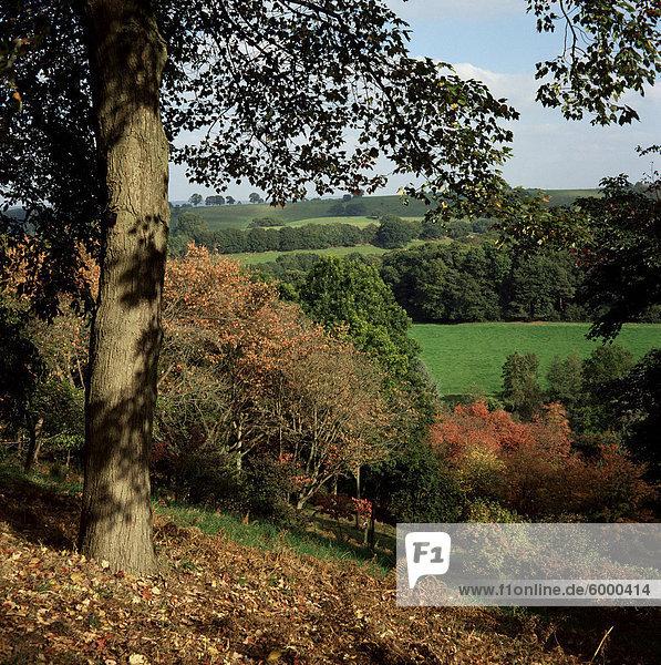Herbstfarben  Winkworth Arboretum  Surrey  England  Vereinigtes Königreich  Europa