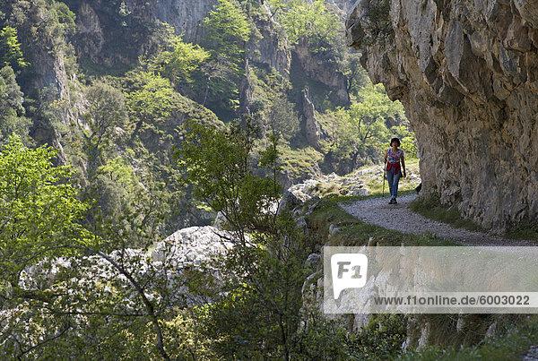 Wandern Sie den Fußweg kümmert sich Gorge  Picos de Europa  Castilla y Leon  Spanien  Europa