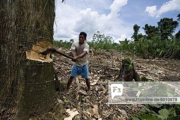 Arbeiten im Chakra (Garten)  Amazonas  Ecuador  Südamerika