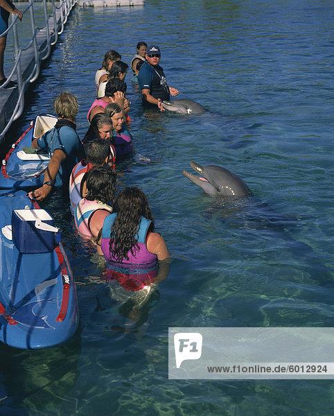 Kleine Gruppe von Menschen stehen im Wasser  Schwimmen mit Delphinen  Sea World  Surfers Paradise  Queensland  Australien  Pazifik