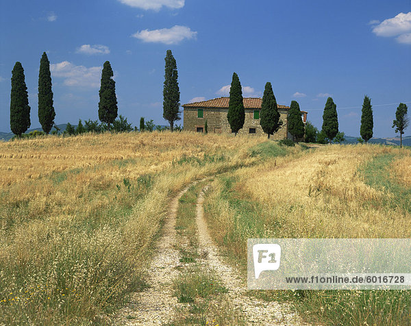 Rough track leads to an old house behind cypress trees in Tuscany  Italy  Europe
