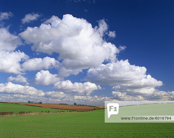 Agricultural landscape of fields and blue sky with white clouds in Lincolnshire  England  United Kingdom  Europe