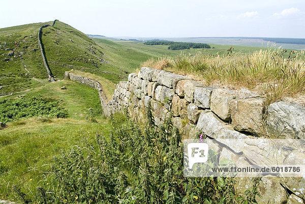 Der Hadrianswall  nahe lag  UNESCO Weltkulturerbe  Northumberland  England  Vereinigtes Königreich  Europa