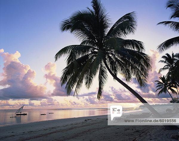 Palm Baum am tropischen Strand  mit Boote vor der Küste im Morgengrauen  in Tansania  Ostafrika  Afrika