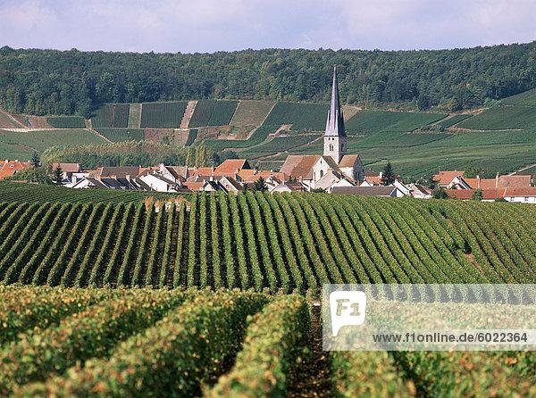 Chamery  Montagne de Reims  Champagne  Frankreich  Europa