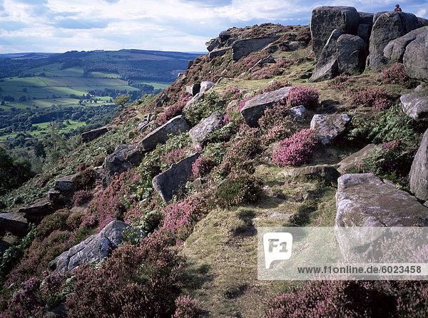 Heather und felsiges Gelände  Froggatt Edge  Derbyshire  England  Vereinigtes Königreich  Europa