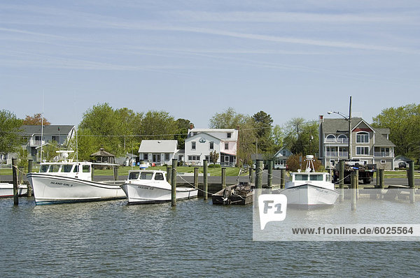 Hartriegel Harbour  Tilghman Insel  Talbot County  Chesapeake Bay Area  Maryland  USA  Nordamerika