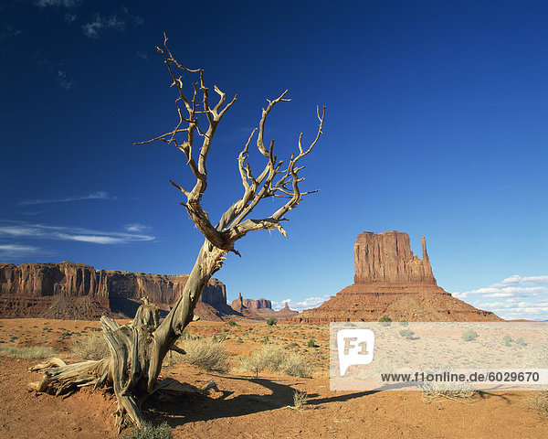 Dead tree in the desert landscape with rock formations and cliffs in the background in Monument Valley  Arizona  United States of America  North America