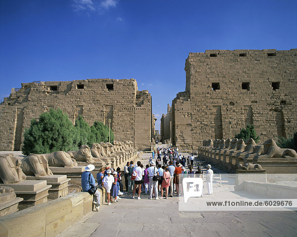 Crowd of tourists on the Processional Avenue  lined with ram-headed sphinxes  Temple of Karnak  Thebes  UNESCO World Heritage Site  Egypt  North Africa  Africa