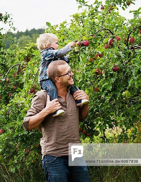 Kommissionierung Äpfel mit seinem jungen Sohn Vater
