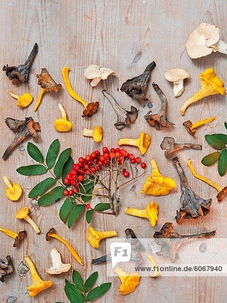 Eberesche Sorbus aucuparia Stilleben still stills Stillleben Lifestyle