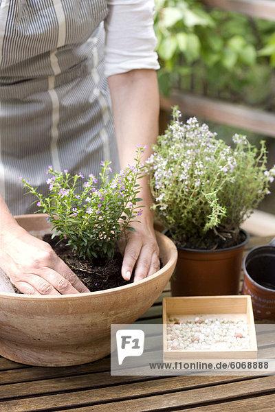 Frau Wiederbepflanzung Pflanzen