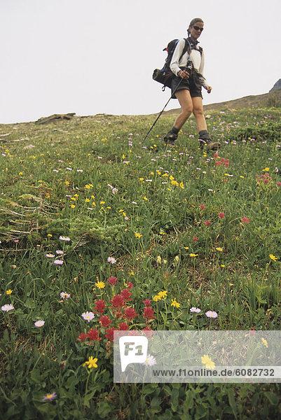wandern  Wildblume  umgeben