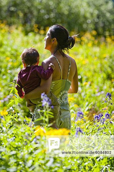 Espe  Populus tremula  Außenaufnahme  tragen  Sohn  Bewunderung  Landschaftlich schön  landschaftlich reizvoll  Wildblume  Wiese  braun  Mutter - Mensch  Colorado  Monat  alt