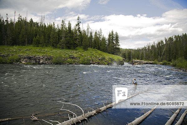 Fluss  Fischer  Idaho
