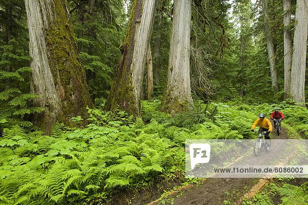 Berg  folgen  fahren  grün  Überfluss  Wachstum  Wald  2  alt  mitfahren