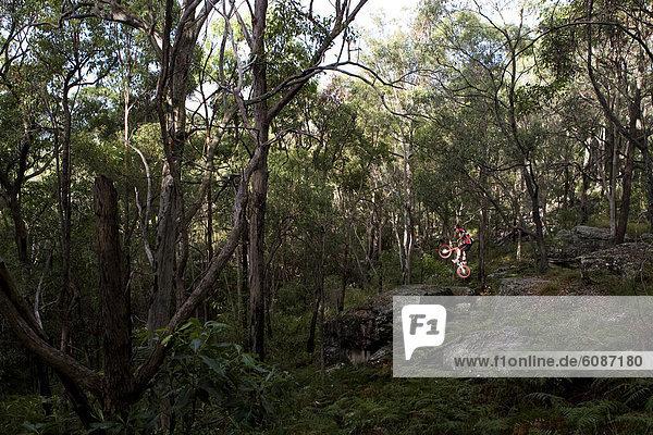 fahren , Wald , groß,  großes,  großer,  große,  großen , springen , Australien , Brisbane , Queensland