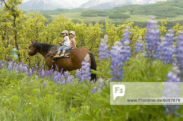 nahe  Blume  folgen  fahren  Nostalgie  reiten - Pferd  2  jung  vorwärts  Mädchen  Lupine  Colorado  Telluride