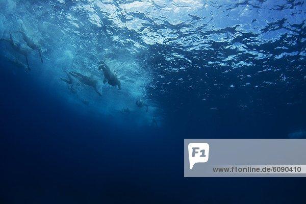 entfernt  Tropisch  Tropen  subtropisch  Wasser  Ozean  Unterwasseraufnahme  Insel  Ansicht  schwimmen  Fiji