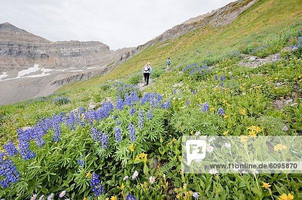 hoch  oben  gehen  folgen  Nostalgie  wandern  Wildblume  2