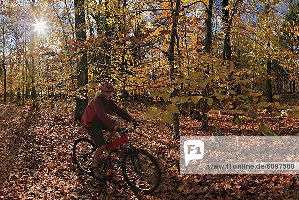 Mountain biker riding through autumn leaves  Adirondack Park  New York State  USA