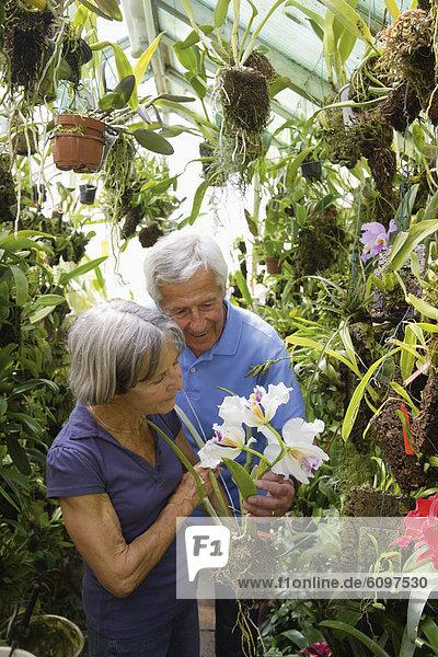 Germany  Bavaria  Senior couple gardening in glass house