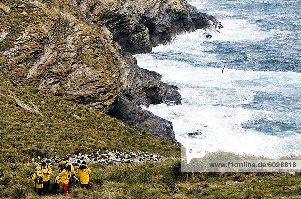 Tourist  schwarz  Albatros  Falklandinseln