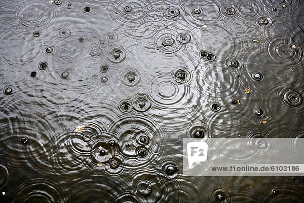 heraustropfen  tropfen  undicht  Regen  Teich