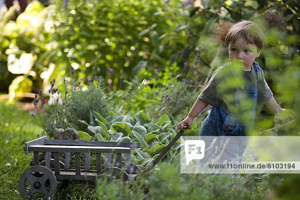 ziehen  Junge - Person  Garten