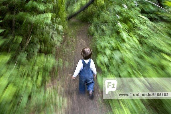 Laubwald  folgen  rennen