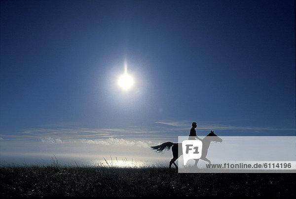 Mann  Silhouette  über  Ozean  reiten - Pferd
