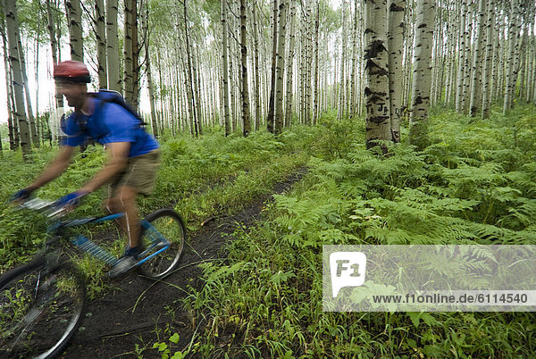 Man mountain biking through aspen forest  Redstone  Colorado (blurred motion).