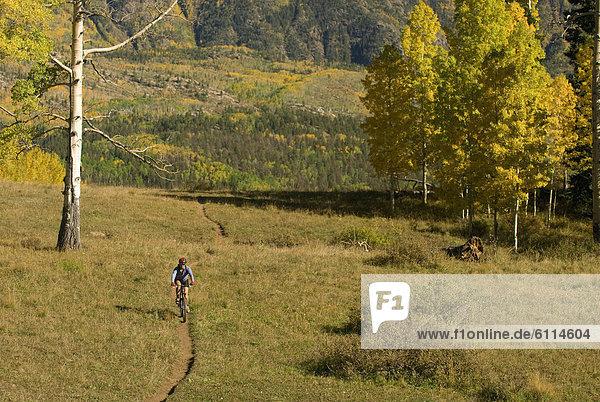 Espe  Populus tremula  Frau  Baum  gelb  radfahren  Colorado  San Juan National Forest