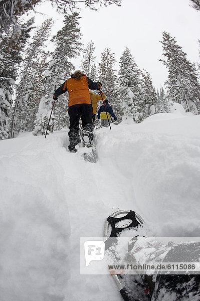 niedrig  Laubwald  Biegung  Biegungen  Kurve  Kurven  gewölbt  Bogen  gebogen  4  Mensch  Menschen  folgen  Gesichtspuder  Ansicht  Flachwinkelansicht  Winkel  tief  Oregon  Schneeschuhlaufen