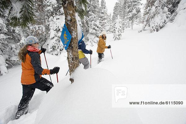 Biegung  Biegungen  Kurve  Kurven  gewölbt  Bogen  gebogen  Schneeschuh  Mensch  Menschen  gehen  folgen  Stange  Zeichen  Nostalgie  Ski  Rückansicht  Gesichtspuder  Ansicht  3  tief  Oregon  Signal