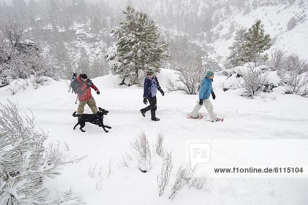 hoch  oben  Biegung  Biegungen  Kurve  Kurven  gewölbt  Bogen  gebogen  gehen  folgen  Hund  Ansicht  Flachwinkelansicht  1  3  Seitenansicht  Winkel  Oregon  Schnee