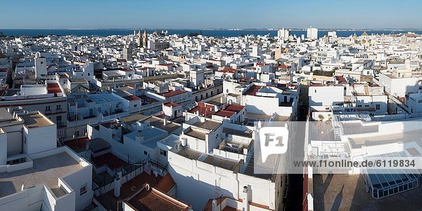 aerial view of the old town of Cadiz  Andalucia  Spain