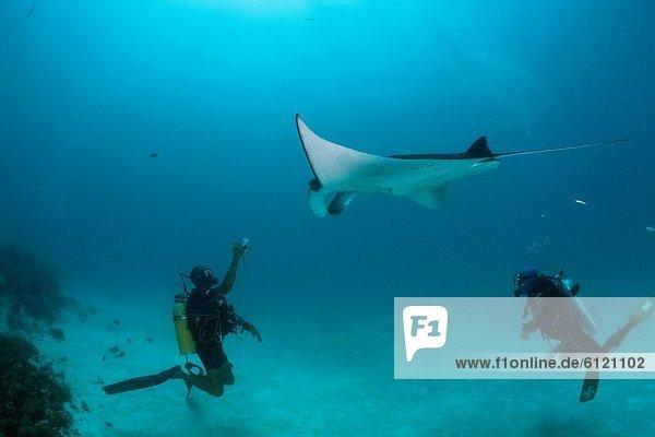 Scuba Diver taken photo of Manta  Manta birostris  Hanifaru Bay  Baa Atoll  Maldives