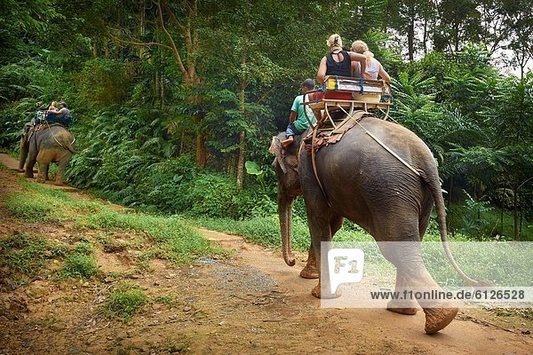 Thailand - Krabi province  Khao Lak National Park  elephant riding in tropical forest