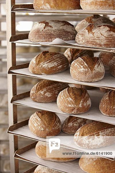 Tabletts mit Brot auf Regal in der Küche