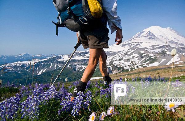 Backpackerin am Cowlitz Divide  Mount Rainier National Park  Washington  USA