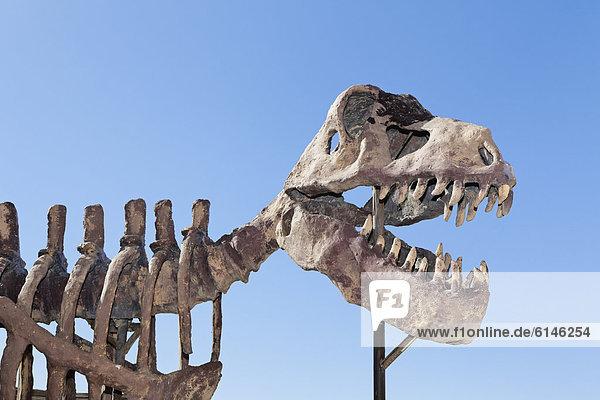 Skeletal model of a Tyrannosaurus rex  Erfoud  MeknËs-Tafilalet  Morocco  Maghreb  North Africa  Africa
