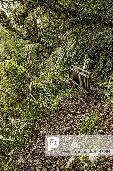 Wanderin mit Rucksack im Regenwald  am Wanderweg im Mt. Egmont Nationalpark  Nordinsel  Neuseeland