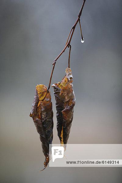 Tag Baum Regen Ast Herbst Regentropfen