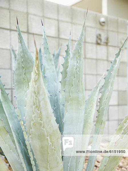 Außenaufnahme,Wachstum,Pflanze,Close-up,freie Natur