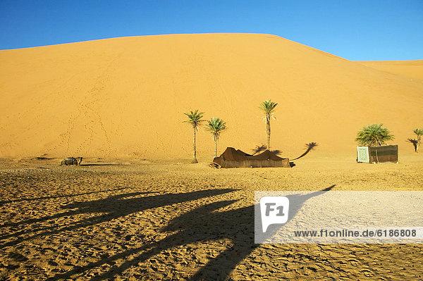 Schatten Wüste Sand Kamel