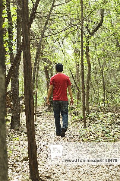 Laubwald  Mann  gehen  Weg  Hispanier